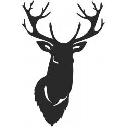 divočina (1)